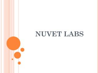 NuVet Labs: Facts about Bengal Cats