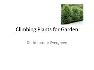 Garden Consultation - Garden design