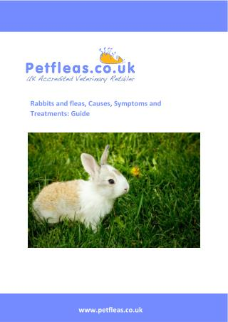 Rabbits and fleas, Causes, Symptoms and Treatments a Guide