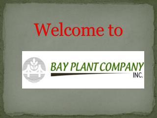 Buy plants online in CA