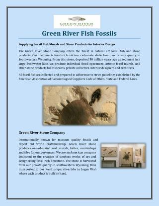 Green River Fish Fossils