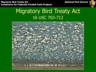 Migratory Bird Treaty Act