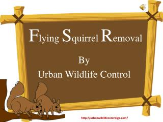 Humane Methods For Flying Squirrel Removal