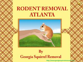 Specialized and Affordable Rodent Removal in Atlanta