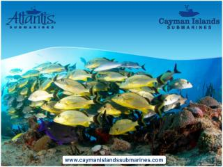 One of the most exciting things to do at Cayman Islands
