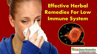 Effective Herbal Remedies For Low Immune System