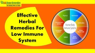 Herbal Immunity Boosting Supplements To Increase Immunity Of Body