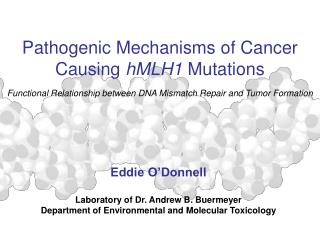 Pathogenic Mechanisms of Cancer  Causing hMLH1 Mutations Functional Relationship between DNA Mismatch Repair and Tumor F