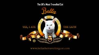 Uk Most Travelled Cat - Bella The Travelling Cat