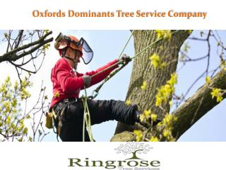 Tree Pruning Service in Wantage