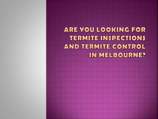 Termite inspection, protection, contol & pest control services