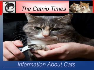 Alternative Option Of Cheap Cat Declawing