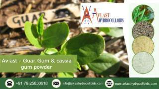 Avlast Hydrocolloids – Guar Gum and Cassia Gum Powder Manufacturer