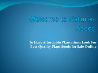 To Have Affordable Plantations Look For Best Quality Plant Seeds for Sale Online