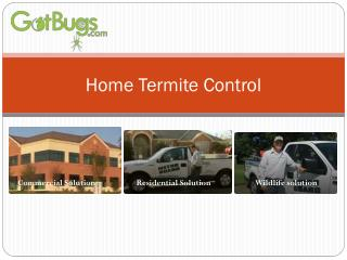 residential pest control dallas