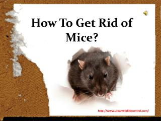 Why We Need Mice Removal Service