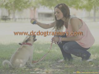 Washington dc dog training
