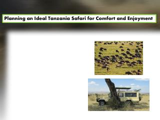 Planning an Ideal Tanzania Safari for Comfort and Enjoyment