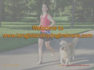 Dog training long island