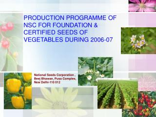 PRODUCTION PROGRAMME OF NSC FOR FOUNDATION  CERTIFIED SEEDS OF VEGETABLES DURING 2006-07