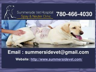 Summerside Vet Hospital � Animal Clinic in Edmonton