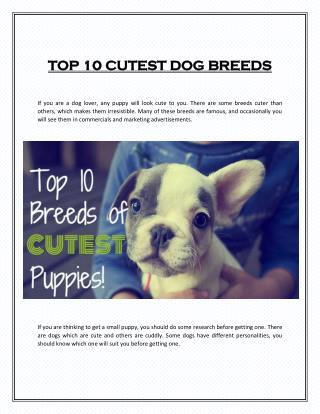 TOP 10 CUTEST DOG BREEDS
