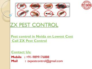 Eco-Friendly Pest Control for bed bugs in Noida - 10% off Call ZX Pest Control
