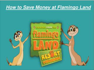 How to Save Money at Flamingo Land