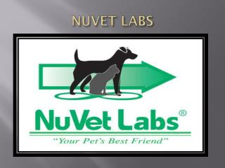 Nuvet Labs Reviews|Best Gear for Travel and Exercise with Your Dog