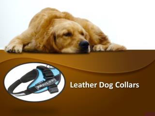 Buy Leather Dog Collars and Harness from Online Store