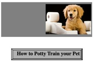 How to Potty Train your Pet