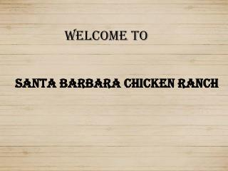 Santa Barbara Chicken Ranch PPT
