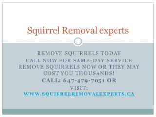 Squirrel Removal experts| Professional squirrel removal Toronto