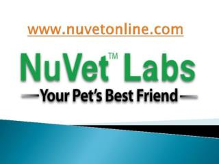 NuVet Reviews | Pet Couture: What's Hot (And What's Not)
