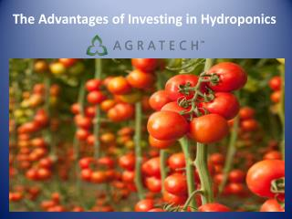 The Advantages of Investing in Hydroponics