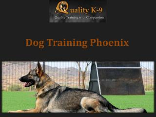 Dog Training Phoenix