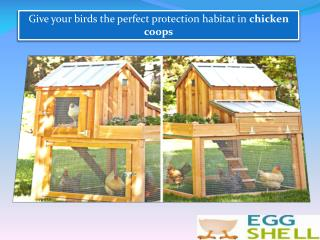 Give your birds the perfect protection habitat in chicken coops