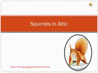 How To Remove Squirrels in Attic