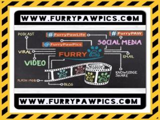 Furry Paws- Custom Pet Art & Portraits, Pet Boutique