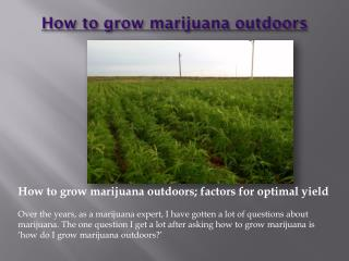 How to grow marijuana outdoors