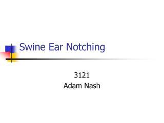 Swine Ear Notching
