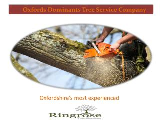 Professional Arborist Service in Kennington