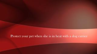 Protect your pet when she is in heat with a dog carrier