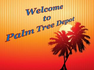 Sabal Palm: Landscape Decoration Alternative