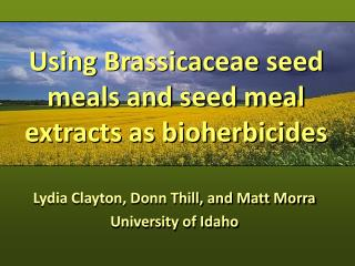 Using Brassicaceae seed meals and seed meal extracts as bioherbicides