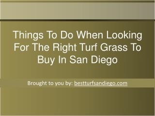 Things To Do When Looking For The Right Turf Grass To Buy In San Diego