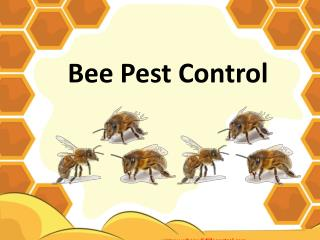 Why We Need Bee Pest Control