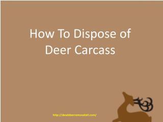 How To Dispose Of Deer Carcass