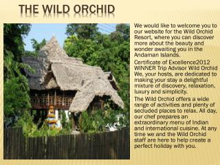 The Wild Orchid