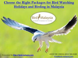 Choose the Right Packages for Bird Watching Holidays